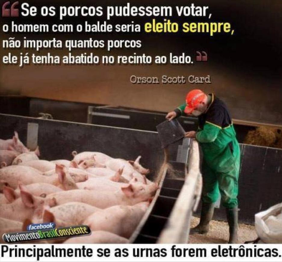 pigs_vote
